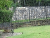 wrought iron fencing 024